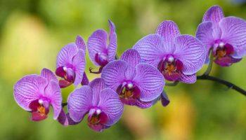 ¿Qué Significa Soñar con Orquídeas?