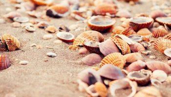 Significado de Soñar con Conchas de Mar