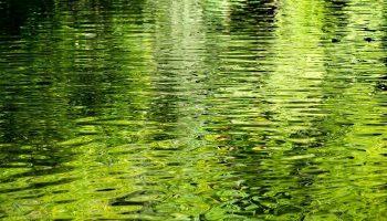Soñar con Agua Verde