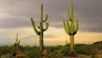 ¿Qué Significa Soñar con Cactus?