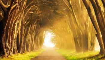 Significado de Soñar con Camino